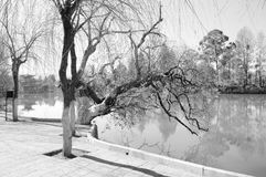 Árvores em Dragon Pool preto - parque chinês foto de stock