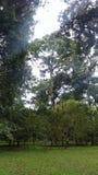 Árvores em jardins botânicos de bali imagens de stock