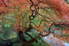 Árvores em jardins de Butchart Imagens de Stock Royalty Free