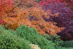 Árvores em jardins de Butchart Foto de Stock