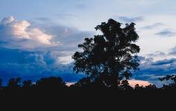 Árvores em nebuloso com o céu na silhueta do fundo da noite Fotos de Stock Royalty Free