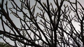 Árvores em seu melhor Imagens de Stock Royalty Free