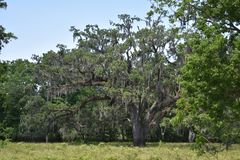 Árvores em Texas Brazos State Park imagem de stock