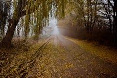 Árvores em torno de uma estrada pequena fotografia de stock royalty free