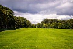 Árvores em torno do campo Imagens de Stock Royalty Free