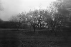 Árvores em um borrão do sumário da floresta Fotografia de Stock