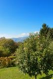 Árvores em um campo, céu azul Fotografia de Stock Royalty Free