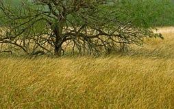 Árvores em um campo de grama Fotos de Stock Royalty Free