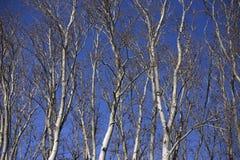 Árvores em um dia do outono Fotos de Stock