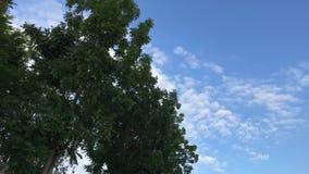 Árvores em um fundo do céu Conduzindo o 'trotinette' Capturado do velomotor com stadycam Ásia filme