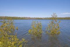 Árvores em um lago inundado imagem de stock royalty free