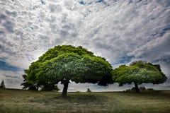 Árvores em um monte Imagens de Stock Royalty Free
