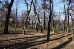 Árvores em um parc Foto de Stock