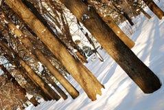 Árvores em um parque fotografia de stock