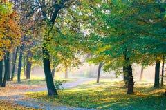 Árvores em um parque Fotos de Stock Royalty Free