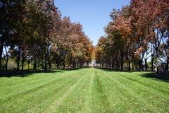 Árvores em um parque fotografia de stock royalty free