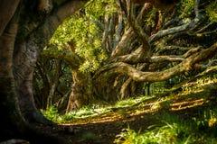 Árvores em um parque fotos de stock