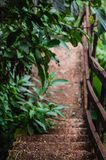 Árvores em um trajeto abaixo de uma floresta imagem de stock
