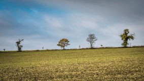 Árvores em uma cume no inverno Imagens de Stock Royalty Free