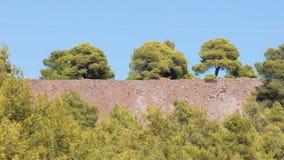 Árvores em uma fileira em Grécia Imagem de Stock