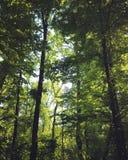 Árvores em uma floresta fotografia de stock royalty free