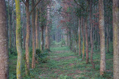 Árvores em uma floresta Imagem de Stock Royalty Free