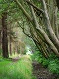 Árvores em uma ilha holandesa Texel Imagens de Stock Royalty Free