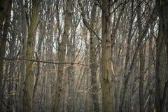 Árvores em uma madeira do outono foto de stock