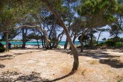 Árvores em uma maneira à praia em Menorca Imagens de Stock Royalty Free