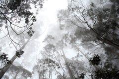 Árvores em uma névoa imagens de stock