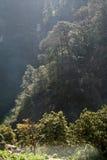 Árvores embebidas luz solar fotos de stock