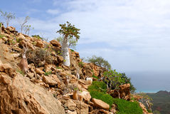 Ilha de Socotra imagem de stock royalty free