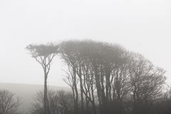 Árvores enevoadas Fotos de Stock