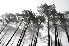 Árvores enevoadas Foto de Stock Royalty Free