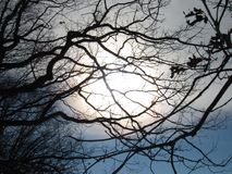 Árvores ensolaradas Fotografia de Stock