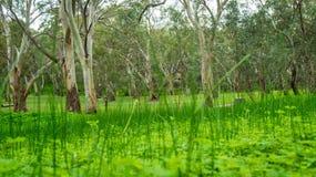 Árvores entre a grama Imagens de Stock