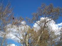 Árvores entre nuvens fotografia de stock royalty free