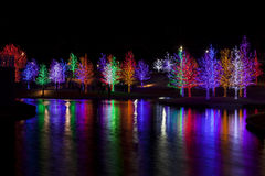 Árvores envolvidas em luzes do diodo emissor de luz para o Natal Fotografia de Stock