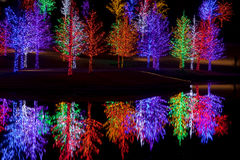 Árvores envolvidas em luzes do diodo emissor de luz para o Natal Imagem de Stock Royalty Free