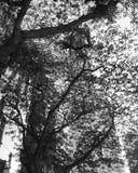 Árvores escuras Fotos de Stock Royalty Free