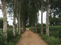 Árvores estáveis Imagens de Stock Royalty Free