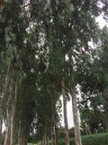 Árvores estáveis imagens de stock