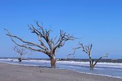 Árvores estéreis Foto de Stock Royalty Free