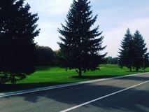 Árvores, estrada, outono, sol Foto de Stock