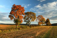 Árvores extravagantes Imagens de Stock Royalty Free