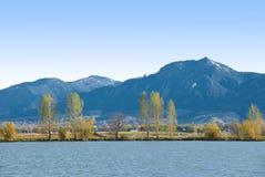 Árvores Feathery, costa do lago e montanhas azuis fotografia de stock royalty free