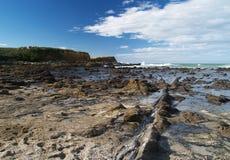Árvores fossilizadas na costa de mar fotografia de stock