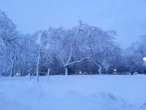 Árvores frias Fotografia de Stock Royalty Free