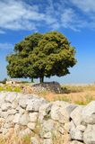 Árvores frondosas e parede de pedra seca Fotos de Stock