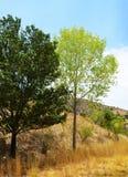 Árvores frondosas no campo fotografia de stock royalty free